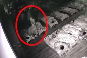 Một giáo viên mầm non Trung Quốc bị tố tát, đạp vào mặt trẻ