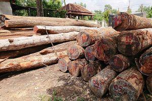 Xử lý cán bộ liên quan trùm gỗ lậu Phượng 'râu'