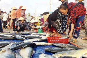 Hà Tĩnh: Khai thác thủy sản 6 tháng đầu năm đạt gần 19.989 tấn