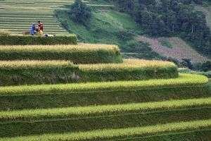 Cuộc chiến chống nóng lên toàn cầu có thể làm giảm sản lượng nông nghiệp