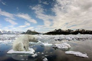 Hiệu ứng domino tăng hiệu ứng nhà kính đẩy Trái Đất vào nguy hiểm