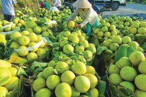 Châu Thành (Tiền Giang) phát huy lợi thế vùng nguyên liệu trái cây