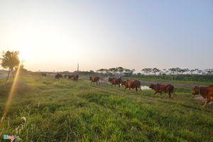 Nếu chăn thả trâu bò còn 'đóng thuế' thì có khi hít thở không khí cũng phải… mất tiền!