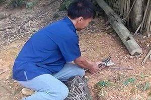 Lạng Sơn: Kinh hãi dê 15 kg bị trăn rừng nuốt trọn