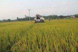 Vĩnh Phúc: Sửa đổi cơ chế chính sách hỗ trợ tái cơ cấu ngành nông nghiệp