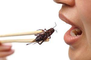 Ăn côn trùng có lợi cho đường ruột