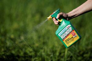 Monsanto phải bồi thường vì thuốc diệt cỏ Roundup