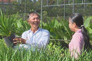 Nông dân Sa Đéc trồng thành công cây phát tài Singapore