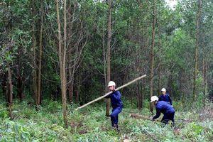 Đưa cơ sở sản xuất công nghiệp, nuôi trồng thủy sản chi trả dịch vụ môi trường rừng