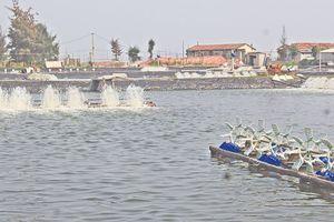 Sản lượng nuôi trồng thủy sản huyện Nông Cống đạt 1.744 tấn