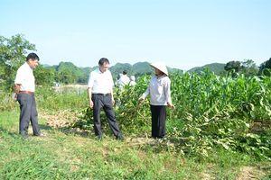 Tuyên Quang: Vườn cây ăn quả của dân liên tiếp bị phá hoại