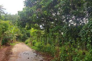 Vụ mẹ kế đánh con chồng ở Bình Phước: 'Vết thương đầy người, tinh thần cháu suy sụp'