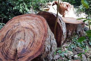 Tàn phá rừng Bắc Kạn