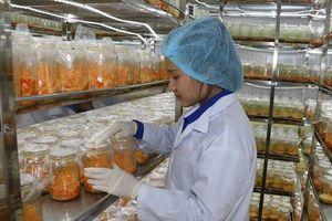 Ứng dụng công nghệ sinh học để trồng nấm vì sức khỏe cộng đồng