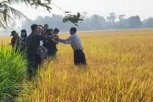 Bảo đảm lợi nhuận cho nông dân vùng lúa gạo sạch Vĩnh Long