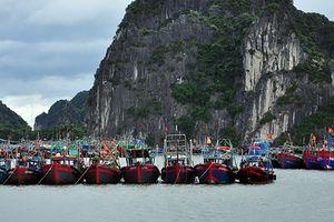 Quảng Ninh cho học sinh nghỉ học, huy động 5 xe thiết giáp chống bão số 4