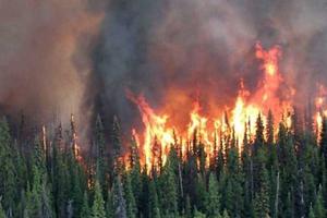 Canada ban bố tình trạng khẩn cấp vì cháy rừng lan rộng