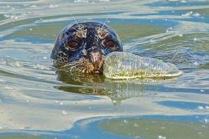 Rác thải nhựa đang giết chết đại dương như thế nào?