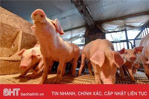 Trung Quốc tiêu hủy hơn 8.000 con lợn ngăn chặn dịch cúm heo châu Phi