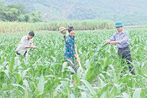Lan tỏa việc học tập và làm theo Bác ở huyện Thường Xuân