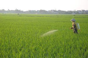 Hà Nam: Phòng trừ sâu bệnh gây hại cho lúa Mùa