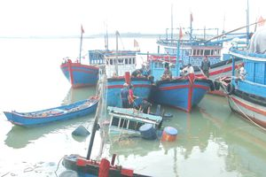 Truy tìm tàu vận tải biển đâm chìm tàu đánh cá của ngư dân Bình Thuận