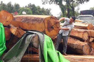 Chuyển đổi rừng trồng cao su, 10 năm chưa đòi được tiền bán gỗ