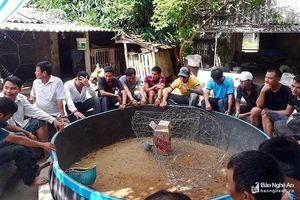 Nghệ An: 37 người đàn ông bị vây bắt khi chơi chọi gà ăn tiền