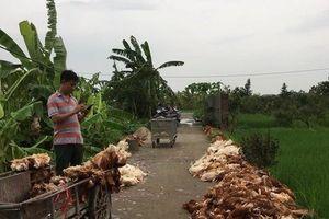 Nông dân khóc ròng vì hàng ngàn con gà bị chết do sự cố điện