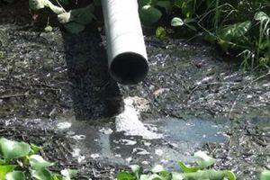 Phát hiện cơ sở giết mổ gia súc xả nước thải chưa qua xử lý