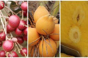 4 loại trái cây ngon, mới lạ của nông dân Việt