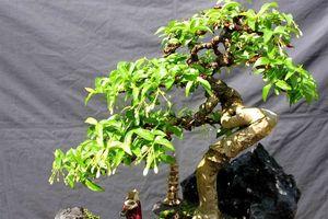 Loại cây nên trồng trong nhà giúp hút sạch bức xạ sóng điện, wifi