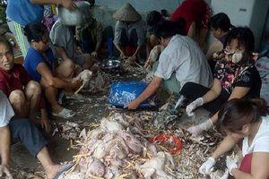 Hơn nghìn con gà bị chết ngạt do sự cố điện