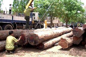 Vụ bắt trùm gỗ lậu Phượng 'râu': Hạt trưởng và hàng loạt cấp dưới bị kỷ luật