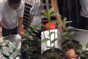 Nghi vấn clip đại gia Hòa Bình vào Bình Dương mua hoa lan giá 2,7 tỉ đồng