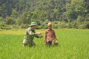 Giúp đồng bào Rục chủ động trồng cây lúa nước