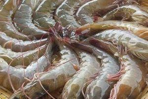 Những sai lầm khi ăn tôm gây nguy hại đến sức khỏe