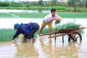 Nông dân Nghệ An 'giải cứu' rau màu sau mưa lớn