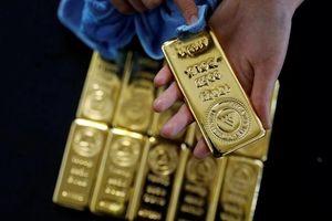 Giá vàng ngày 19/8: Vừa khởi sắc đã bị vùi dập