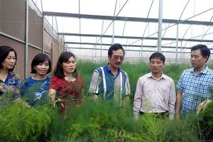 Tái cơ cấu trồng trọt: Lựa chọn cây trồng chủ lực