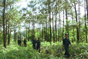 Tìm giải pháp quản lý, bảo vệ rừng vùng giáp ranh