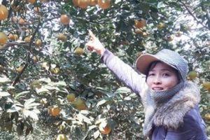 Đổi đời nhờ trồng cây 'quả vàng' trên vùng đất bạc