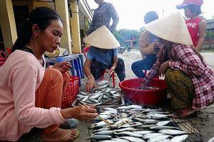 Huế: Ngư dân Phong Hải vươn khơi bám biển gần bờ, ổn định cuộc sống