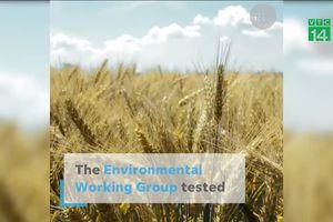 Hóa chất thuốc diệt cỏ Monsanto có trong ngũ cốc nguy hiểm thế nào?