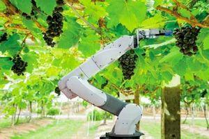 Tăng cường liên kết nghiên cứu khoa học trong phát triển công nghệ rô bốt