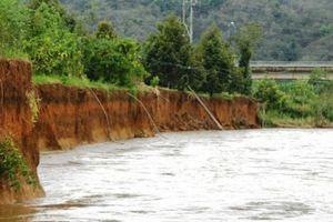 Dân xót xa nhìn đất nông nghiệp rơi ầm ầm xuống sông Đạ Quay