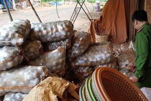 Đà Lạt: Bắt quả tang vụ trộn đất vào khoai tây