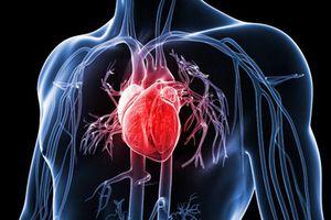 Diễn đàn quy mô về tim mạch