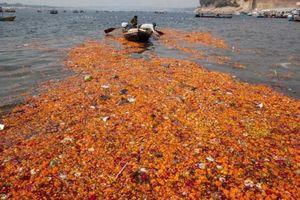 Biến hoa bỏ đi thành nước hoa, xà phòng, phân hữu cơ