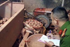 Trộn đất đỏ 'lên đời' cho khoai tây Trung Quốc ngay tại Chợ Nông sản Đà Lạt
